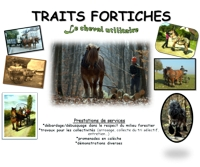 Traits Fortiches